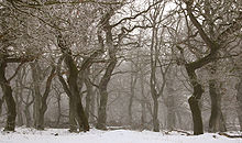 220px-Langaa_egeskov_rimfrost