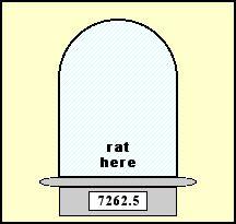 rat-here